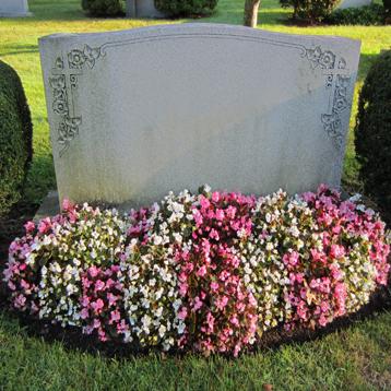 Newton Cemetery Begonia Flower Bed