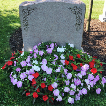 Newton Cemetery Ground Cover New Guinea Impatien Flower Bed