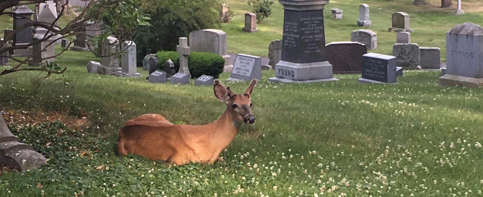 Deer at Newton Cemetery