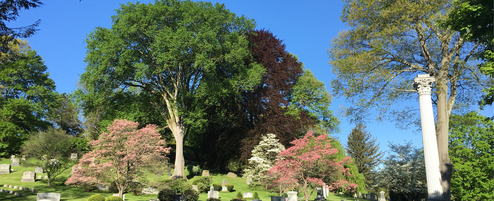American Elm and Dogwoods at Newton Cemetery