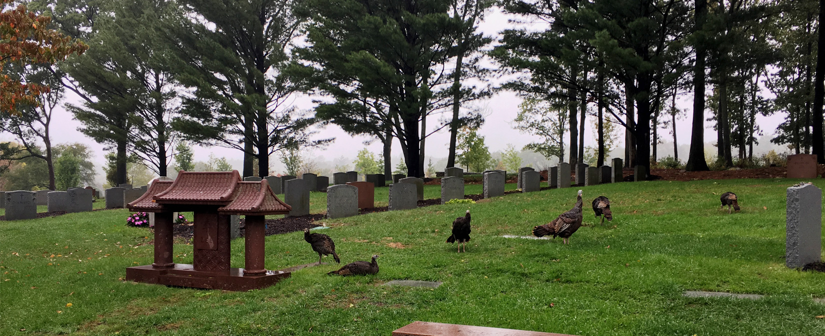 Turkeys at Newton Cemetery