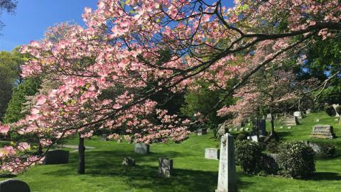 Newton Cemetery Spring Tree Tour