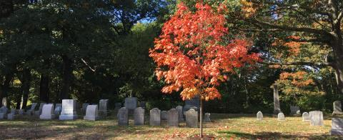 Sponsor a Tree at Newton Cemetery