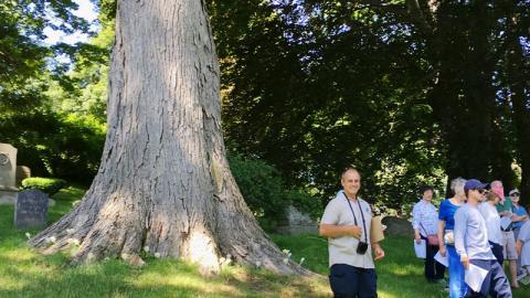 Land of the Giants Tree Tour