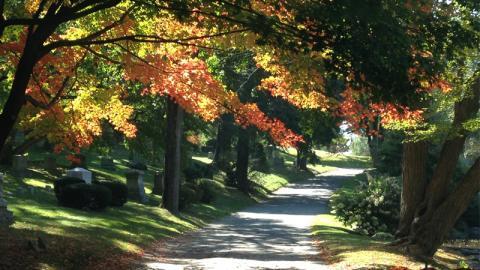 Newton Cemetery Fall Tree Tour